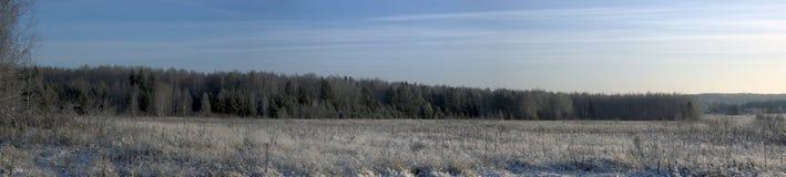 Panorama d'un horizontal de l'hiver photographie stock libre de droits