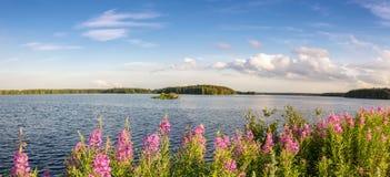 Panorama d'un paysage d'été avec des fleurs sur le lac, réservoir de reftinskoye, Russie, les Monts Oural, juillet Photographie stock