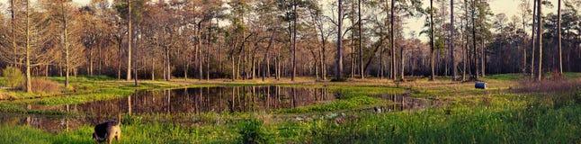 Panorama d'une forêt Image libre de droits
