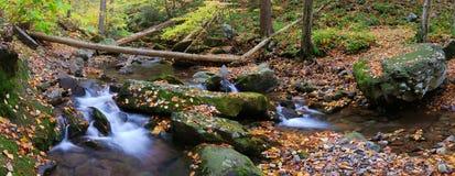 Panorama da angra com filiais de árvore na floresta Imagens de Stock