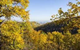 Panorama da cidade através das folhas de outono imagem de stock