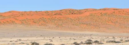 Panorama da duna e do Oryx da área de Namibrand em Namíbia Imagens de Stock