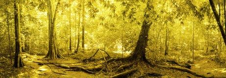 Panorama da floresta úmida Fotografia de Stock