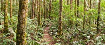 Panorama da floresta Fotografia de Stock