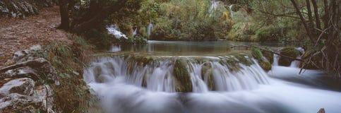 Panorama da floresta Imagens de Stock