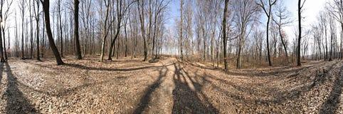 Panorama da floresta imagens de stock royalty free