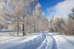 Panorama da floresta coberto de neve com uma estrada de terra, Rússia, imagens de stock