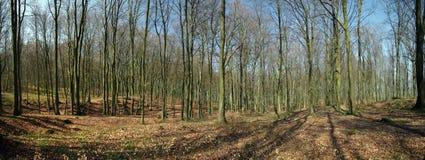 Panorama da floresta da mola Fotografia de Stock Royalty Free