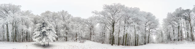 Panorama da floresta do inverno com neve e árvore Foto de Stock Royalty Free