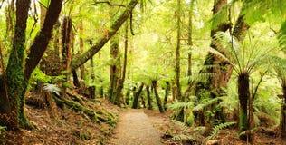 Panorama da floresta húmida Imagem de Stock