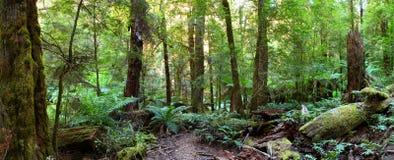 Panorama da floresta húmida Fotografia de Stock Royalty Free