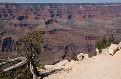 Panorama da garganta grande Foto de Stock Royalty Free