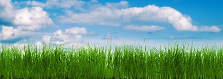 Panorama da grama com um céu azul Imagem de Stock