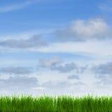 Panorama da grama com um céu azul Fotografia de Stock