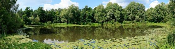 Panorama da lagoa do verão Imagens de Stock Royalty Free