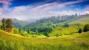 Panorama da manhã nevoenta do verão nas montanhas Fotografia de Stock