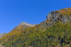 Panorama da montanha, em outubro, com larício e pinhos fotografia de stock