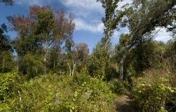 Panorama da natureza Imagem de Stock Royalty Free