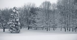Panorama da neve foto de stock royalty free