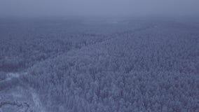 Panorama da opinião aérea da floresta coberto de neve video estoque