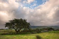 Panorama da paisagem do campo Imagens de Stock Royalty Free