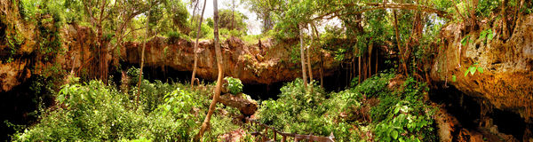 Panorama da selva imagens de stock