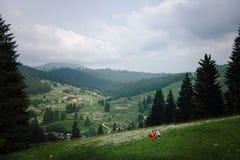 Panorama da vista bonita das montanhas, do campo e do prado cobertos com as margaridas O par bonito é Fotos de Stock Royalty Free
