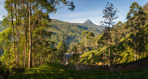 Panorama of Dalhousie town with Adams peak and tea plantations. At sunrise, Srilanka, Asia stock image