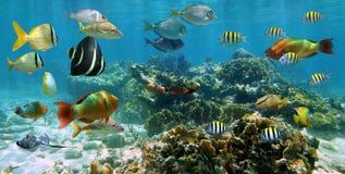 Panorama dans un récif coralien avec le banc des poissons Photos libres de droits