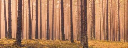 Panorama das árvores Imagens de Stock
