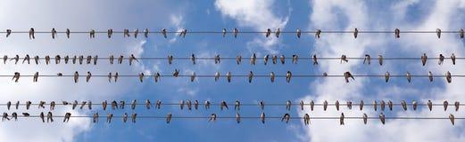 Panorama das andorinhas foto de stock