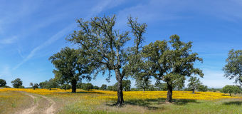 Panorama das flores e das árvores do prado da mola - Espanha Imagem de Stock