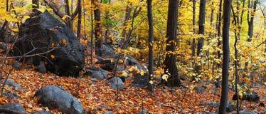 Panorama das madeiras do outono Foto de Stock