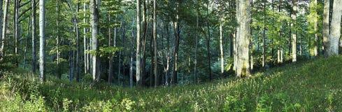Panorama de árboles Imagenes de archivo
