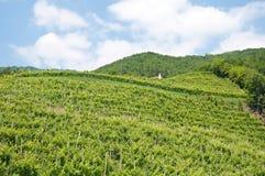 Panorama de beaux paysages de valdobbiadene image libre de droits