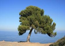 Panorama de Blufftop Image libre de droits