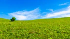 Panorama de campos verdes Fotografía de archivo