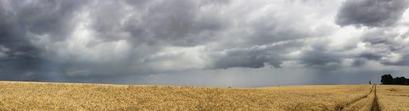 Panorama de champ et de tempête Photographie stock