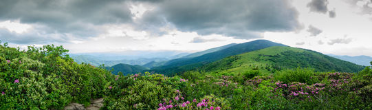 Panorama de chauve rond de Jane Bald Image libre de droits