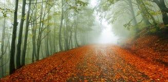 Panorama de chemin d'automne Image libre de droits