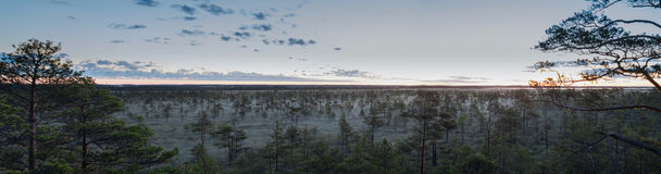 Panorama de cime d'arbre Image stock