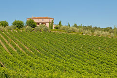 Panorama de classico de chianti photo stock