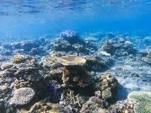 Panorama de coraux de Tableau Eau peu profonde de rivage exotique d'île Photo sous-marine de paysage tropical de bord de la mer Photos libres de droits