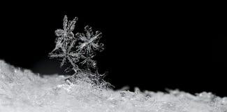 Panorama de cristaux de neige sur le noir Photos libres de droits