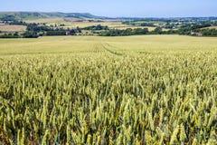 Panorama de Eaast Sussex, Inglaterra Vista para a baliza de Firle foto de stock royalty free