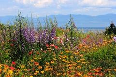 Panorama de fleur près de route Photographie stock