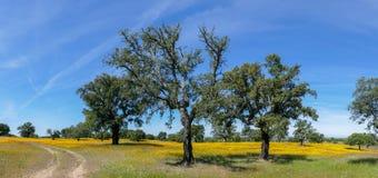 Panorama de fleurs et d'arbres de pré de ressort - Espagne Image stock