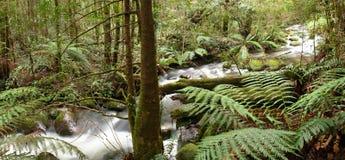 Panorama de fleuve de forêt humide Images stock