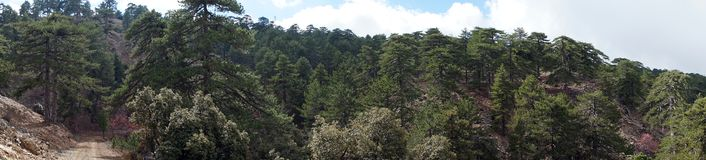 Panorama de forêt Photo libre de droits