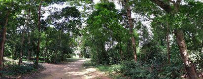 Panorama de forêt Photo stock
